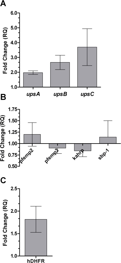 Analysis of expression of var and non-var exported genes upon exposure to oxidative stress in genetically modified parasites.A. The relative change in expression of the ups A, B, and C var subtypes upon exposure to 10 µM tBHP in Δpfsir2 parasites in relation to unexposed Δpfsir2 parasites. B. Analysis of expression of exported non-var genes upon exposure to oxidative stress in Δpfsir2 parasites. C. Analysis of expression of hdhfr – the gene under control of an upsC element in the 3D7/upsC transgenic line – upon exposure to 10 µM tBHP. Stress induction, cDNA production and qPCR analysis were performed as described in the legend to Fig. 1. Error bars represent mean of triplicates ± SEM.