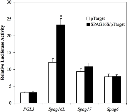 SPAG16S stimulates Spag16L promoter activity.Relative luciferase activity, normalized to PGL3 control promoter plasmid co-transfected with pTarget control vector plasmid. Beas-2B cells were co-transfected with indicated promoter/PGL3 constructs (Spag16L, Spag17, and Spag6) and either pTarget or a SPAG16S/pTarget plasmid. Luciferase activity was measured after 48 hours to assess promoter function. (* p<0.05 compared with pTarget control vector co-transfection).