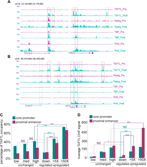 TAF7L binds strongly on the majority of genes upregulated during adipogenesis.(A) Read accumulation for eight ChIP-seq datasets including TAF7L, PPARγ, TBP and Pol II before (_pre) and after (_post) adipocyte differentiation at the Rfc4 and Adipoq gene loci. (B) The same as in (A) at the Ccdc37 and Klf15 gene loci. Vertical axis is 0–500 reads for all factors, co-localized peaks were marked with boxes, black boxes indicate promoters and red boxes indicate enhancers, solid lines denote active genes and dashed lines denote inactive gene. (C) Frequency (vertical axis) of TAF7L occupancy on gene expression groups (horizontal axis) including unchanged (low, med, high) (three blue dots regions from left-bottom to right-top in Figure 3A), downregulated (blue dots in left-bottom region in Figure 3A), and upregulated (>5×, >50×, two orange dots regions from lower to higher in Figure 3A). (D) Average TAF7L binding signal strength (vertical axis) on the core promoters (500 bp from TSS) and proximal enhancers (500 bp to 5 kb from TSS) of three major gene expression groups as in (C). (Regular t-test for (C) and (D), NS is no significant, *p<0.05, ***p<0.001).DOI:http://dx.doi.org/10.7554/eLife.00170.012