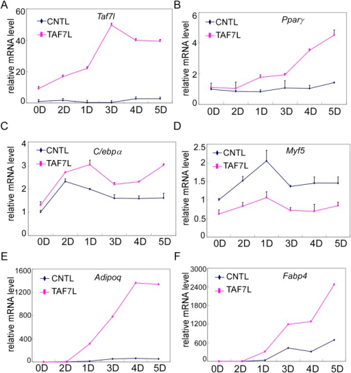 Gene expression analysis of TAF7L-expressing C2C12 cells.(A)–(F) Time course of gene expression by RT-qPCR analysis of Taf7l (A), Pparγ (B), C/ebpα (C), Myf5 (D), Adipoq (E), and Fabp4 (F) in C2C12.CNTL and C2C12.TAF7L cells at 0D, 1D, 2D, 3D, 4D and 5D post adipogenic induction. D, days; CNTL, C2C12.CNTL; TAF7L, C2C12.TAF7L. mRNA levels in C2C12.CNTL cells at 0D were assigned to 1, mRNA levels of each gene at 0D, 1D, 2D, 3D, 4D, and 5D in both C2C12.CNTL and C2C12.TAF7L cells during adipogenesis were compared to mRNA levels in C2C12.CNTL cells at 0D respectively, data is mean from triplicates.DOI:http://dx.doi.org/10.7554/eLife.00170.011