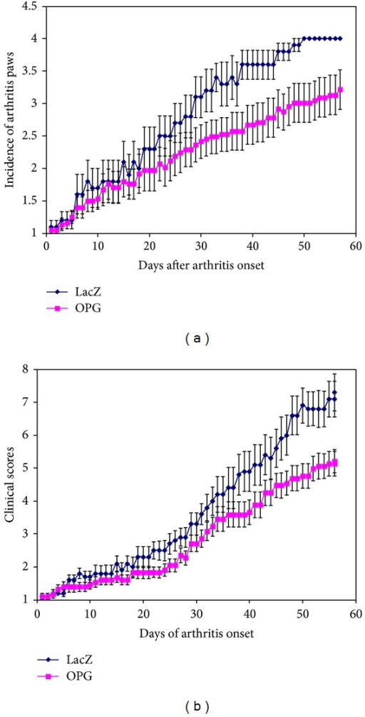 Summary of clinical assessment of CIA mice with or without OPG gene modification. Panel (a) shows the mean numbers of arthritic paws of each mouse during the disease progression, while panel (b) illustrates the arthritis scores of arthritic paws from the day of disease onset.