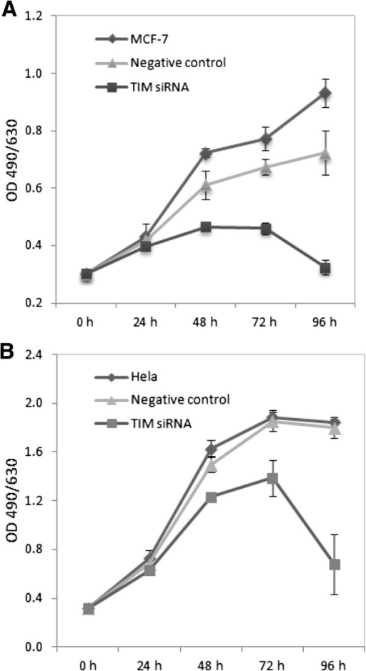 MCF7 and HeLa cell proliferation rates were assessed at baseline, 24 hours, 48 hours, 72 hours, and 96 hours following transfection with a TIMELESS siRNA and a scrambled sequence negative control oligo. (A) Transfection with TIMELESS siRNA in MCF7 cells slowed down cell proliferation compared to negative controls (P < 0.05); (B)TIMELESS knockdown did not result in a significant reduction in cell proliferation rate in HeLa cells. Error bars represent standard deviations.