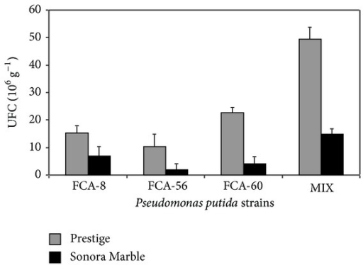 Population of Pseudomonas putida strains in the rhizosphere of poinsettia Prestige and Sonora Marble cultivars. Colony forming units (CFU) in plants with P. putida strain: FCA-8, FCA-56, FCA-60, and MIX (inoculated simultaneously with the three rhizobacteria) at 110 DAI. Data for controls of both Prestige and Sonora Marble cultivars are not shown since they were found to have 0 CFU.