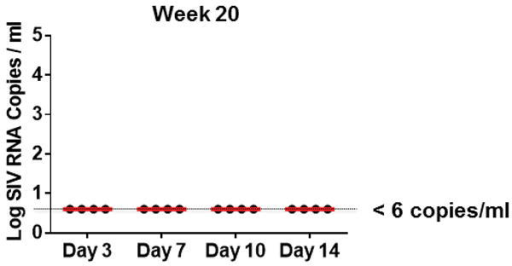 Ultrasensitive plasma viral loads in monkeys during ART.Log plasma viral RNA (copies/ml) at week 20 in rhesus monkeys infected with SIVmac251 and following initiation of ART on days 3, 7, 10, and 14 of infection. Assay sensitivity is 6 RNA copies/ml.