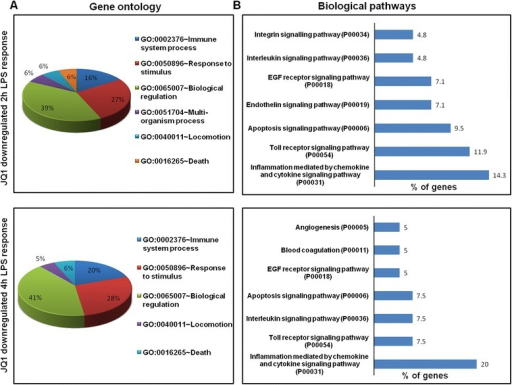 Functional annotation and biological pathways of the JQ1-downregulated genes. (A) Analysis of GO term enrichment for the 'biological process' category of JQ1 downregulated genes. The top GO terms are ranked by the number of counts. (B) The most highly represented biological pathways of JQ1 downregulated genes in BV-2 microglial cells. GO, gene ontology.