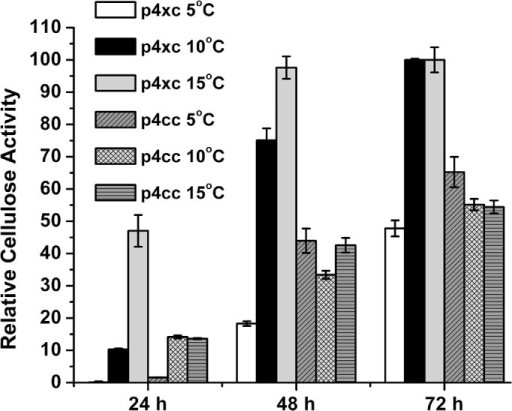 Cellulase activity of Pseudoalteromonas sp. SM20429 harboring promoter reporter vectors p4xc or p4cc at different temperatures.The activity of the cellulase expressed by p4xc at 15°C for 72 h was taken as 100%.