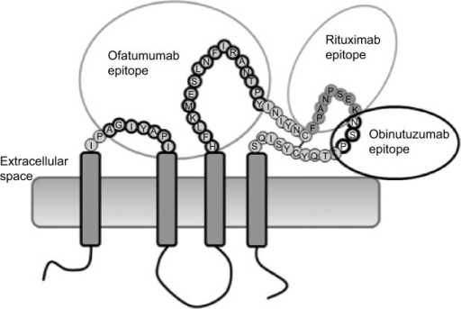Structure of CD20 and epitope targets of ofatumumab, rituximab, and obinutuzumab (GA101).Notes: The CD20 transmembrane receptor is shown with epitopes for binding of ofatumumab, rituximab, and obinutuzumab. Adapted with permission from Klein C, Lammens A, Schafer W, et al. Epitope interactions of monoclonal antibodies targeting CD20 and their relationship to functional properties. MAbs. 2013;5(1):22–33.15