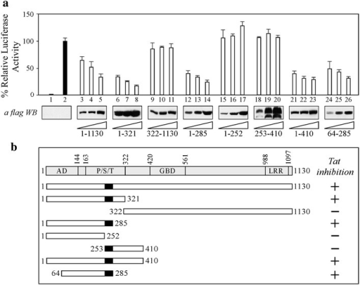 Residues 253-285 of CIITA are essential but not sufficient to inhibit Tat-mediated HIV-1 LTR transactivation. a 293T cells were co-transfected with fixed amounts of pHIV-1LTR Luc, phRL-CMV, pTat and increasing amounts of flag-tagged CIITA full-length or the deletion mutants listed below the western blot analyses. The results of a representative experiment are shown. Mean luciferase activities, normalized to Renilla activity, are presented as percentages relative to activation by Tat set to 100 % (black column 2). Column 1 represents the basal activity of cells transfected with the pcDNA3 vector. The expression of recombinant fCIITA proteins in cell extracts was evaluated by anti-flag western blotting. b Schematic representation of the results of the gene reported assay illustrated in panela. CIITA proteins used for the mapping are shown, along with their capacity to inhibit Tat-dependent activation of LTR promoter (+). The endpoints of CIITA full-length and CIITA deletion mutants are indicated. At the top is a diagram of CIITA with its domains, labeled as follows: AD activation domain, P/S/T proline/serine/threonine-rich domain, GBD GTP-binding domain, and LRR leucine-rich repeats