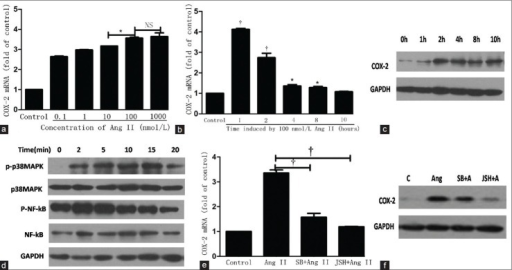Angiotensin II (Ang II) induced the expression of cyclooxygenase-2 (COX-2) and phosphorylation of p38 mitogen-activated protein kinase (p38MAPK) and nuclear factor-kB (NF-kB) in human aortic endothelial cells. (a) mRNA expression of COX-2 according to the concentration of Ang II. *P < 0.01. NS: not significant. (b) mRNA expression of COX-2 according to the time induced by Ang II (100 nmol/L). *P < 0.01 vs. control. †P < 0.001 vs. control. (c) Protein expression of COX-2 induced by Ang II (100 nmol/L). (d) Protein expression of p38 mitogen-activated protein kinase (p38MAPK), phosphorylation of p38MAPK, NF-kB and phosphorylation of NF-kB induced by Ang II. (e) The effect of SB203580 (25 nmol/L) and JSH-23 (25 nmol/L) on COX-2 mRNA expression induced by Ang II for 1 h; †P < 0.001. (f) The effect of SB203580 (25 nmol/L) and JSH-23 (25 nmol/L) on COX-2 protein expression induced by Ang II for 2 h. C means control group, SB + Ang means SB203580 + Ang II group, JSH + Ang means JSH-23 + Ang II group. Data represent the mean ± standard deviation (n = 3).