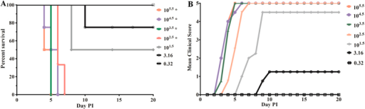 Dose-dependent survival and severity of disease in CA16-infected gerbils.(A) Survival curves for groups of gerbils (n = 8–10) aged 21 days when infected with CA16-194 at a TCID50 of 0.3 to 105.5. Curves were compared with the 0.3 TCID50 group using the log-rank test. *Significantly different from the control group (p < 0.01). (B) Mean clinical scores for groups of gerbils aged 21 days when infected with CA16-194 at a TCID50 of 0.3 to 105.5. One representative of two independent experiments was shown in A and B.