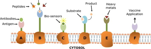 Application of different cell surface display technologies in A antibody production, B peptide library screening, C biosensors, D biocatalysts, E bio-adsorption, and F vaccine development