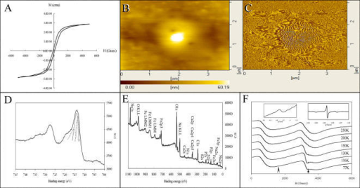 The magnetic properties of IGs determined by magnetic-determining techniques. (A) An averaged magnetization curve of SQUID from the purified IGs at 300°K for six runs. (B) An image of AFM from one of the purified IGs. (C) An image of MFM from one of the purified IGs. (D) A spectrum of ESCA from the purified IGs. The left thin line shows the Fe(2p1/2) of FeOOH. The middle thin line shows the Fe(2p3/2) of Fe2O3. The right thin line shows the Fe(2p1/2) of FeO. (E) A photoelectron spectrum of elemental composition of ESCA from the purified IGs. (F) Typical X-band resonance spectra from the purified IGs at different temperatures. Right inset shows a magnified image from the arrow. Left inset shows a magnified image from the arrowhead.