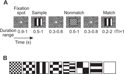 Sequential delayed match-to-sample task.(A) Event sequence. First, a gray fixation spot appears in the center of the screen. Once the monkey fixates on the spot, a sample image replaces the fixation spot for 0.5–1.0 s, after which the spot is restored. After a variable delay-period, the image/spot sequence is repeated 0, 1, 2, or 3 times with nonmatching patterns. Finally, the original (matching) pattern reappears; the monkey has to release the bar within 2 s to get a drop of water as a reward. (ITI, inter-trial interval). (B) Stimuli.