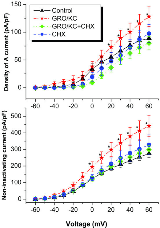 Treatment with the protein synthesis inhibitor cycloheximide (CHX, 3.5 μM) blocked the effects of GRO/KC on K currents in IB4-negative cells. CHX had no effect on K currents in control cells (P = 0.755). CHX was added at the same time as GRO/KC and was present throughout the incubation period. GRO (N = 19) and GRO+CHX (N = 18) cells were from 9 cultures; 12 control cells and 8 CHX cells were from 2 cultures.