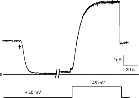 The S-shaped kinetics of LFN translocation through the (PA63)7 channel. After the (PA63)7-induced conductance had reached a more or less steady state, LFN (with the N-terminal His6 tag removed) was added (at the arrow) to the cis-side to a concentration of 6 nM, resulting in a rapid fall in conductance. LFN (along with (PA63)7) was then perfused out of the cis-compartment (during the ∼4-min break in the record); the conductance increased only slightly over this time. When the voltage was stepped from 20 to 45 mV, there was an S-shaped rise of conductance to a value comparable with that before the addition of LFN, and it remained at that value when the voltage was stepped back from 45 to 20 mV. The rate of conductance rise directly reflects the rate of translocation of LFN; i.e., the rate of its traversing the channel and exiting into the trans-solution. This figure was adapted from Fig. 2 of Finkelstein (2009).