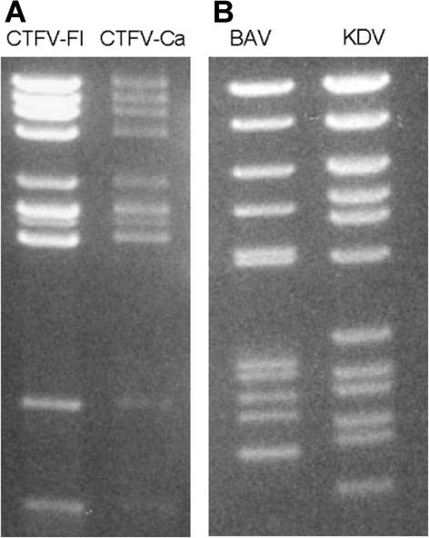 Electropherotypes of coltiviruses and seadornaviruses on 1% agarose gels. A) Colorado tick fever virus (CTFV-Fl) and California hare coltivirus (CTFV-Ca). B) Banna virus (BAV) and Kadipiro virus (KDV).