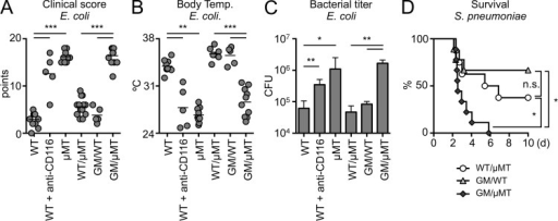 IRA B cells protect against pneumonia. (A) Clinical score of WT, WT receiving anti-CD116, µMT, WT/µMT, GM/WT, and GM/µMT mice 9 h after infection with E. coli (n = 5–10 mice). (B) Body temperature of the groups above. (C) Bacterial titer in BAL after E. coli infection of WT, WT receiving anti-CD116, µMT, WT/µMT, GM/WT, and GM/µMT mice (n = 5–10 mice). (D) Kaplan-Meier survival curves after S. pneumoniae i.t. infection for WT/µMT, GM/WT, and GM/µMT mice (n = 8–10). Relevant data are presented as mean ± SD and tested by ANOVA; *, P < 0.05; **, P < 0.01; ***, P < 0.001.