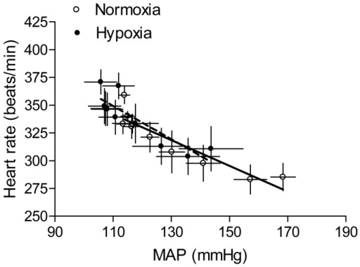 Effect of antenatal hypoxia on the baroreflex sensitivity in female offspring.Heart rate and mean arterial blood pressure (MAP) responses to angiotensin II (300 ng/kg; 1 ml/kg, i.v.) were measured in 3-month-old female offspring that had been exposed in utero to normoxia or hypoxia. The baroreflex sensitivity was determined as the slope of heart rate/MAP (bpm/mmHg). Data are means ± SEM, n = 9.