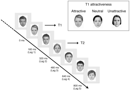 Schematic diagram of dtRSVP task. Note that T1 were attractive, neutral, or unattractive faces, while T2 were always neutral at 320, 640, and 800 ms time lags.