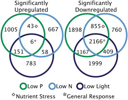 Broad categories of significant transcriptional responses. Diagrams illustrate the patterns of significantly differentially regulated genes across the treatments. Sections without overlap represent unique responses to each treatment. Overlapping sections are indicative of nutrient stress response transcripts [overlap between low nitrogen (N) and low phosphorus (P)], and shared low light and low N or P responses. The generally responsive category describes significantly up or downregulated transcripts shared across three treatments.