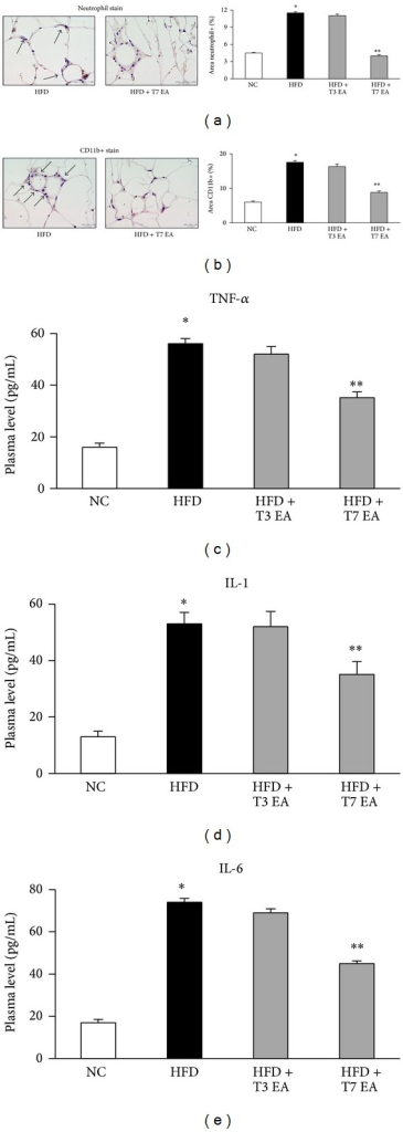 Effects of electroacupuncture on both neutrophil and macrophage activation markers in adipose tissue and cytokines levels altered in animals with dietary obesity. Neutrophil (a), CD11b+ (b) in adipose tissue, and serum TNF-α (c), IL-1 (d) and IL-6 (e) levels, in rats fed with either an HFD or a normal chow. Each result represented the experiment performed in triplicate assays in the different experimental groups. Arrows indicate neutrophil and CD11b+ positive cells, respectively. Results are expressed as means ± SEM. *P < 0.05, compared with normal chow group; **P < 0.05, compared with HFD animals. NC: normal chow. HFD: high fat diet. EA: electroacupuncture. T3: three times of EA treatment. T7: seven times of EA treatment. Original magnification ×40. Scale bars, 100 μm.