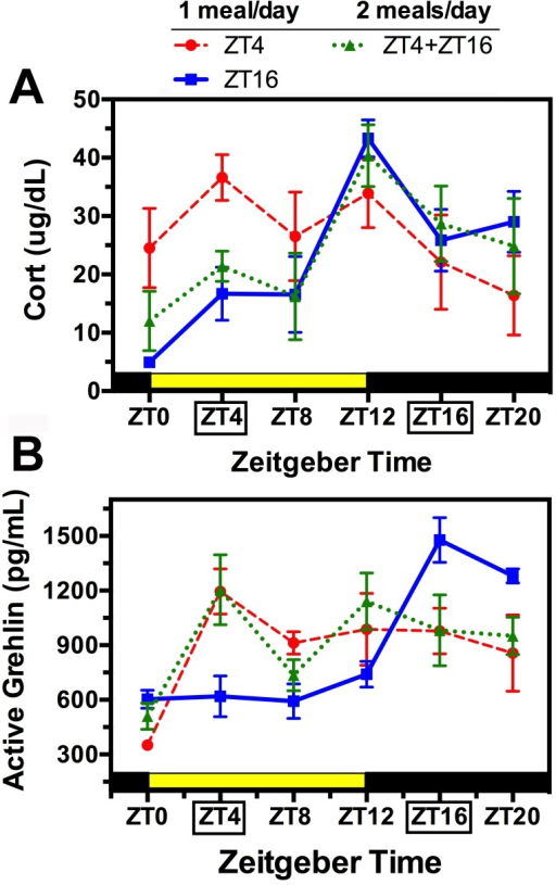 Group mean (± SEM) plasma corticosterone (A) and acyl-ghrelin (B) at 6 times of day from rats fed 2 h daily at ZT4 (red dashed curve) or ZT16 (blue solid curve), or for 1 h at both times (green dotted curve).The daily 12 h light and dark periods are indicated by the heavy yellow and black bars, respectively.