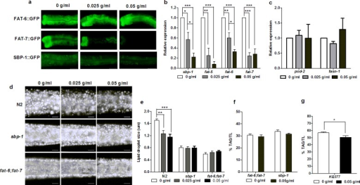 PTE down-regulated the expression of SBP-1 and SCD.(a) PTE did not affect the expression of FAT-6::GFP (around 60 worms totally observed in three biological replicates), but gradually decreased the fluorescent intensity of FAT-7::GFP and SBP-1::GFP (> 80% worms showed consistent reduction of expression, around 60 worms totally observed in three biological replicates). Scale bar is 20 μm. (b) Relative expression levels of sbp-1, fat-5, fat-6, and fat-7 measured by QPCR were significantly decreased with the increased concentrations of PTE. Data were the mean ± SEM of three independent biological replicates. (*: P<0.05, **: P<0.01, ***: P<0.001). (c) Relative expression levels of pod-2 and fasn-1 measured by QPCR. Data were the mean ± SEM of three independent biological replicates. (d) Fat storage indicated by Nile Red staining of fixation was gradually decreased in N2 worms, but not in sbp-1 and fat-6;fat-7 worms with the increased concentrations of PTE. The anterior is in left and the posterior is in the right. Scale bar is 10 μm. (e) Lipid droplet size was significantly decreased in N2 worms, but not in sbp-1 and fat-6;fat-7 worms, with the increased concentrations of PTE. Data were the mean ± SEM of 6 worms. (**: P<0.01, ***: P<0.001). (f) % of TAG/TL of fat-6;fat-7 and sbp-1 mutants treated with PTE. Data were the mean ± SEM of four independent biological replicates. (g) PTE significantly decreased the fat content of KQ377 worms. Data were the mean ± SEM of four independent biological replicates.