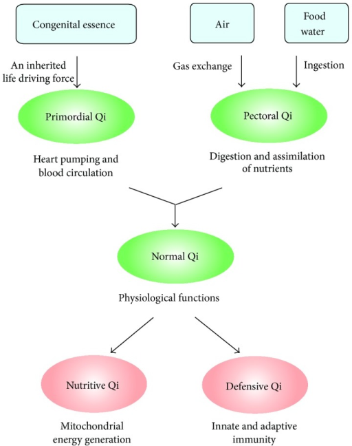 Biochemical and physiological basis of Qi function.