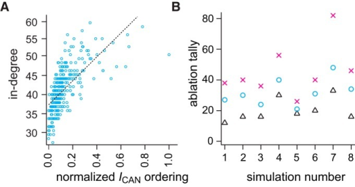 In-degree correlates with normalized ICAN ordering and targeted ablation tallies. A, Linear regression between in-degree (unitless) and normalized ICAN ordering among neurons in the same network. ICAN order was computed based on the maximum number of appearances in the active subnetwork given 15 different thresholds. Blue symbols show the scattered distribution of in-degrees and normalized ICAN ordering. Linear fit is shown by a dotted line. B, Ablation tallies (number of neurons) for three deletion strategies on different network realizations (n = 8). X-symbols mark the tally from eight different simulations where low ICAN-order neurons were selectively ablated. Triangles mark when high ICAN-order neurons were selectively ablated. Circles mark the tally for random neuron deletions (control default strategy).