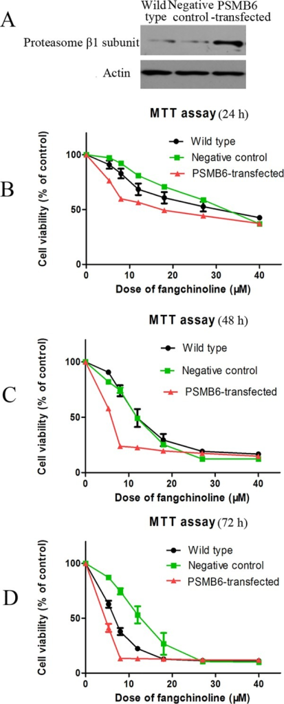 Over-expression of proteasome β1 subunit increased sensitivity of cells to cytotoxicity of fangchinoline.(A) Results of Western blotting assay of proteasome β1 subunit protein expression in wild-type cells, negative-control cells and cells transfected with plasmid encoding PSMB6. (B) Cell viability of wild-type cells, negative-control cells and cells transfected with plasmid encoding PSMB6 after 24 h treatment of fangchinoline at different concentrations. (C) Cell viability of wild type cells, negative control cells and cells transfected with plasmid encoding PSMB6 after 48 h fangchinoline treatment. (d) Cell viability of wild type cells, negative control cells and cells transfected with plasmid encoding PSMB6 after 72 h fangchinoline treatment. Data were statistical results of three independent experiments.