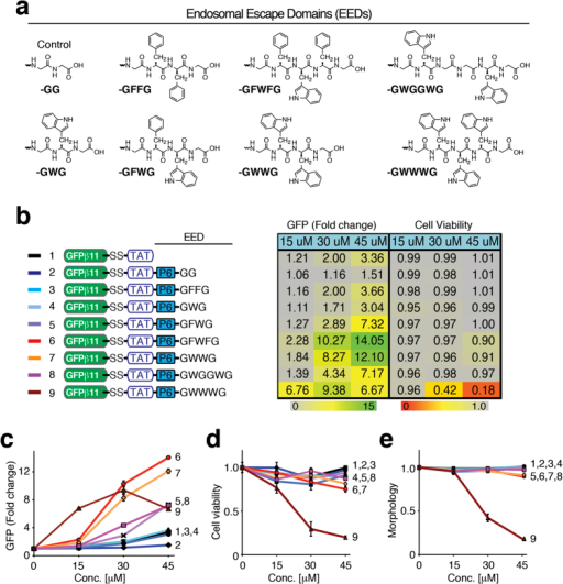 Optimizing design of endosomal escape domain (EED).(a) Structures of EEDs. (b–e) Dose-dependent comparison of GFPβ1-10 H1299-c#G3 cells treated with GFPβ11-(S-S)-TAT-(X) peptides containing a PEG6-spaced aromatic ring hydrophobic endosomal escape domain (EED), as indicated, to parental GFPβ11-(S-S)-TAT peptide and control GFPβ11-(S-S)-TAT-PEG6-GG peptide analyzed by FACS for GFP fluorescence (b,c), cell viability (d), and cellular morphology (e). The table (b) displays mean values from triplicate samples and the graphs (c–e) show the same mean values with S.D.