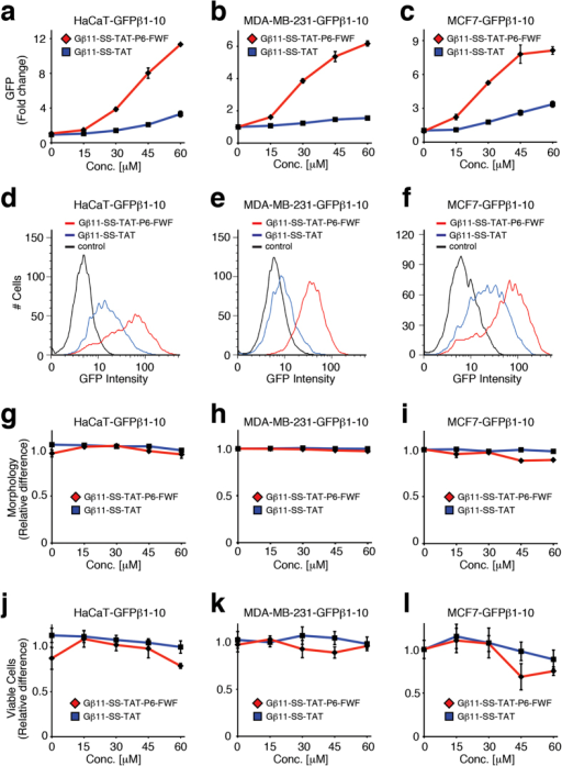 Evaluation of GFPβ11-(S-S)-TAT-PEG6-GFWFG peptide in multiple cell types.Dose-dependent analysis of GFPβ1-10 expressing HaCaT keratinocytes, MDA-MB-231 and MCF7 breast carcinoma cells treated with GFPβ11-(S-S)-TAT-PEG6-GFWFG peptide and parental GFPβ11-(S-S)-TAT peptide by FACS for GFP complementation fluorescence (a–f), cellular morphology (g–i) and cell viability (j–l), respectively. Graphs display mean values of triplicate samples with S.D.