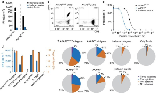 Characterization of mutant-specific T-cell responses in HLA-matched healthy donors.T-cell responses of two different matched healthy donors against neoepitopes AKAP6M1482I and NOP16P169L. Effector cells were coincubated in duplicates with T2-A3 or T2-B7 pulsed either with the relevant peptide or control peptides with the same HLA restriction as the mutated ligands, results are shown as mean (a). Staining of T-cell line HD1-AKAP6 with the mutated or wt multimer (b). IFN-g release of the T-cell line on peptide titration of AKAP6M1482I and its non-mutated counterpart using T2-A3 as targets (duplicates are depicted as mean) (c). IFN-g secretion (left Y-axis) and target-cell lysis (right Y-axis) after coincubation of the T-cell line HD1-AKAP6 with peptide-pulsed and minigene-transduced LCL1 cells performed in triplicates, data shown as mean±s.d. (d). Intracellular cytokine staining (IFN-g, TNF-a and IL-2) on co-culture of the T-cell line HD1-AKAP6 with LCL1 cells, either peptide-pulsed or minigene-transduced, determined by flow cytometry. Cells were gated on ethidium monoazide bromide-negative and CD8-positive events (e).