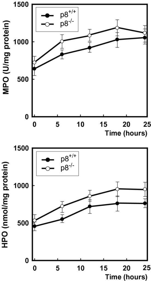 Wild-type and p8-deficient mice were injected intraperitoneally with 70 mg/kg LPS (Salmonella thyphosa), and Myeloperoxidase (MPO) activity and Hydroperoxide (HPO) concentration were measured in lung after 6, 12, 18 and 24 hours. Errors bars represent the standard deviation (n = 7).