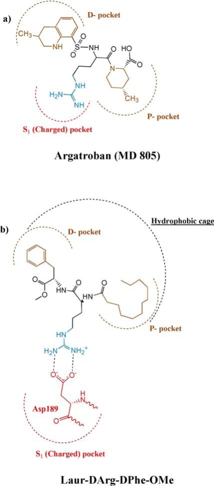 Schematic representation of the binding mode of argatroban (MD 805) (a), and Laur-DArg-DPhe-OMe (b) to the active site of thrombin according to (Lau, Bioorg. Med. Chem. 1995)[35].