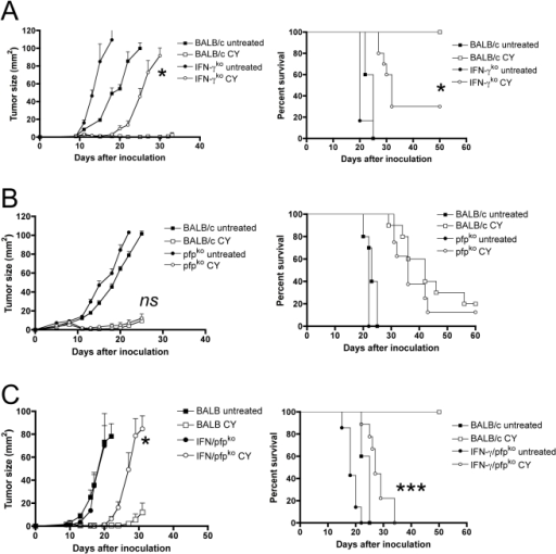 CD8 T cell effector mechanisms.(A) Tumor growth and Kaplan-Meier survival curves in CY-treated IFN-γ-deficient mice and control mice. Data shown are mean±SEM (n = 5) from one experiment (growth curve, left panel) or total data from two experiments (survival curve, right panel). Tumor cells were inoculated at day 0, treated with CY at day 9. * P<0.05 when CY in immunocompetent mice and IFN-γ deficient mice is compared. (B) Tumor growth curves and Kaplan-Meier survival curves in CY-treated perforin-deficient and normal control mice. ns = not significant when CY in immuno-competent and perforin-deficient mice are compared. Tumor cells were inoculated at day 0 and treated with CY at day 8. ns, not significant. (C) Tumor growth and Kaplan-Meier survival curves after CY treatment in perforin/IFN-γ double-deficient mice, compared to immunocompetent mice. Data shown are mean±SEM (n = 5) from one experiment (growth curve, left panel) or total data from two experiments (survival curve, right panel). Tumor cells were inoculated at day 0 and treated with CY at day 9. * P<0.05, *** P<0.001 when BALB/c + CY is compared with IFN-γ/pfp-ko + CY.
