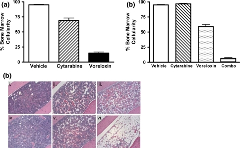 Voreloxin and cytarabine, alone or in combination, ablate normal bone marrow CD-1 mice received vehicle, voreloxin, cytarabine, or voreloxin and cytarabine in combination on day 0 and 4. On day 6, femurs were isolated, and cellularity was assessed in H&E stained bone marrow sections. a Percent cellularity remaining in the bone marrow following treatment: Vehicle, 0.17% methanesulfonic acid in 5% sorbitol IV q4d ×2 and water SC tid q4d ×2; Cytarabine, 60 mg/kg SC tid q4d ×2; Voreloxin, 20 mg/kg IV q4d ×2. b Percent cellularity remaining in the bone marrow following treatment: Vehicle, as in (a); Cytarabine, 20 mg/kg SC tid q4d ×2; Voreloxin, 10 mg/kg IV q4d ×2; Combo, cytarabine, 20 mg/kg SC tid q4d ×2 and voreloxin, 10 mg/kg IV q4d ×2. c H&E stained femur sections, original magnification ×100: i. vehicle, as in (a); ii. cytarabine, 60 mg/kg SC tid q4d ×2; iii. voreloxin, 20 mg/kg IV q4d ×2; iv. cytarabine, 20 mg/kg SC tid q4d ×2; v. voreloxin, 10 mg/kg IV q4d ×2; vi. combo: cytarabine, 20 mg/kg SC tid q4d ×2, and voreloxin, 10 mg/kg IV q4d ×2