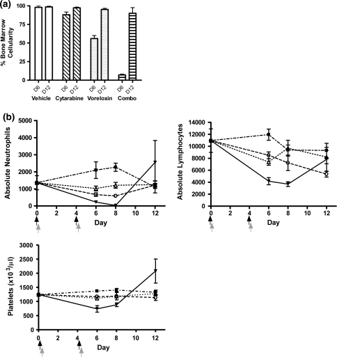 Voreloxin and cytarabine in combination causes reversible neutropenia with a more modest impact on platelets CD-1 mice received vehicle, voreloxin, cytarabine, or voreloxin and cytarabine in combination on day 0 and 4. a Percent cellularity remaining in the bone marrow on days 6 (D6) and 12 (D12): Vehicle, 0.17% methanesulfonic acid in 5% sorbitol IV q4d ×2 and water SC tid q4d ×2; Cytarabine, 20 mg/kg SC tid q4d ×2; Voreloxin, 10 mg/kg IV q4d ×2; Combo, cytarabine, 20 mg/kg SC tid q4d ×2, and voreloxin, 10 mg/kg IV q4d ×2. b Peripheral blood was isolated on days 6, 8, and 12 for analysis. Absolute neutrophils, absolute lymphocytes, and platelets (×103/μl) in circulation following treatment: (Filled square), vehicle; (Triangle), cytarabine, 20 mg/kg SC tid q4d ×2; (Circle), voreloxin, 10 mg/kg IV q4d ×2; (Filled inverted triangle), combo: cytarabine, 20 mg/kg SC tid q4d ×2, and voreloxin, 10 mg/kg IV q4d ×2. Black arrow represents the three cytarbine doses, and the gray arrow represents the voreloxin dose
