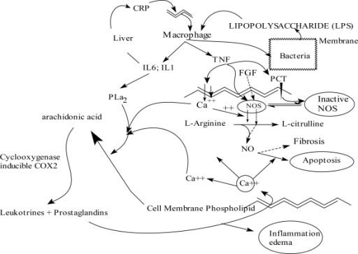 Physiopathology of pyelonephritis.Abbreviations: IL, interleukin; NO, nitric oxide; NOS, NO synthase; PCT, procalcitonin; PLA2, phospholipase A2; CRP, C-reactive protein; FGF, fibroblast growth factor; TNF, tumor necrosis factor.
