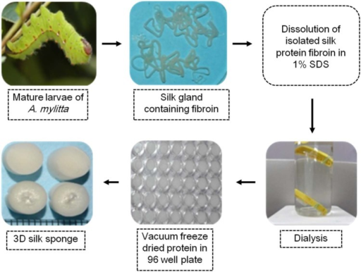 Fabrication method of 3D sponges from nonmulberry silk protein fibroin.3D: three-dimensional; SDS: sodium dodecyl sulfate.