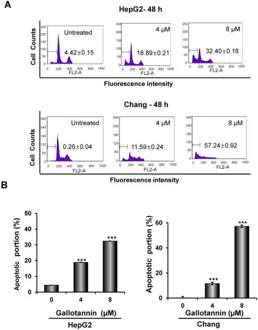 Gallotannin increased sub-G1 population and regulated apoptotic genes in Hep G2 and Chang cells. (A) Effect of gallotannin on sub G1 population by FACS analysis with propidium iodide (PI) staining. Hep G2 and Chang cells were treated with various concentrations of gallotannin (0, 4, 8 μM) for 48 h and stained with PI using Flow cytometry. (B) Bar graphs for sub-G1 population in Hep G2 and Chang cells. ***, p < 0.001, vs untreated control. (C) Effect of gallotannin on apoptotic proteins in Hep G2 and Chang cells. Cell lysates from gallatonnin treated Hep G2 and Chang cells were subjected for western blotting for PARP, pro-caspase 9 and 3, Bcl2 and β-Actin. (D) Apoptotic cells were detected by TUNEL assay. Cells in the absence or presence of gallotannin were stained with TUNEL-FITC (Green) and PI (Red). Data represent means ± S.D.