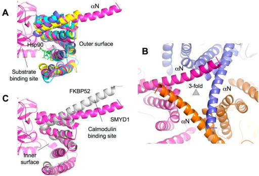 TPR-like C-terminal domain (CTD). (A) Structural superposition of the CTD domains of SMYD and TPR domain of Hop1 (PDB code: 1ELR). SMYD proteins are represented by ribbons and colored according to the scheme in Figure 1C. The Hop1 TPR domain is shown in blue. Hsp90 peptide bound to Hop1 is depicted by balls-and-sticks; (B) Crystal lattice of SMYD1 shows the involvement of the protruding C-terminal α-helix in the crystal packing; and (C) Structural superposition of the CTD domain of SMYD1 and TPR domain of FKBP52 (PDB code: 1QZ2). SMYD1 is colored in purple and FKBP52 in white.