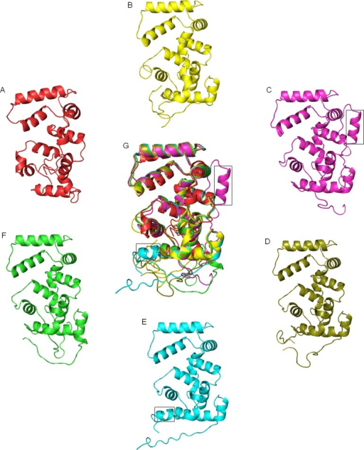 Comparison of structures of CBL proteins from different species.Protein structure of calcineurin B of Saccharomyces cerevisiae (A) and CBL1 from, Ostreococcus tauri (B), Chlorella variabilis (C), Physcomitrella patens (D), chickpea (E) and Arabidopsis (F) were generated using Phyre2 remote homology modeling server. All five structures from different species were analysed by pyMOL program. All the structures were superimposed (G) to show presence of extra helix (in boxes) in CBL proteins of Chlorella and chickpea.