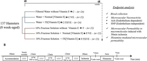 Experimental design and protocol.(1A) Eight weeks-old hamsters were treated during 8 weeks as described: animals were divided into two major groups, substitution of the drinking water by 10% fructose solution or kept drinking filtered water. Each major group had the formulated chow associated to three different concentrations of vitamin E: zero vitamin E (groups F and C), 75U/kg (normal concentration of vitamin E—groups F/VE and C/VE) and 375U/kg (5 times the normal concentration of vitamin E—groups F/5XVE and C/5XVE). After the 8th week of treatment, the hamster cheek pouch microcirculation was evaluated by intravital microscopy and animals were euthanized for blood collection. (1B) Microcirculatory function was evaluated in two fronts: endothelial function by topical application of either acetylcholine or sodium nitroprusside, both in three different concentrations (10−9, 10−7 and 10-5M), in a cumulative dose-response curve and macromolecular permeability increase induced by either ischemia/reperfusion (30 min local ischemia followed by reperfusion) or topical application of histamine (5 μM during 5 min).