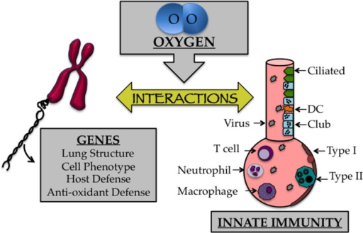 The early life oxygen environment affects changes in genetic as well as innate immune mechanisms. Cartoon depicting the affect early life oxygen environment imparts on genes that specify lung structure and function with cells involved in innate immunity.