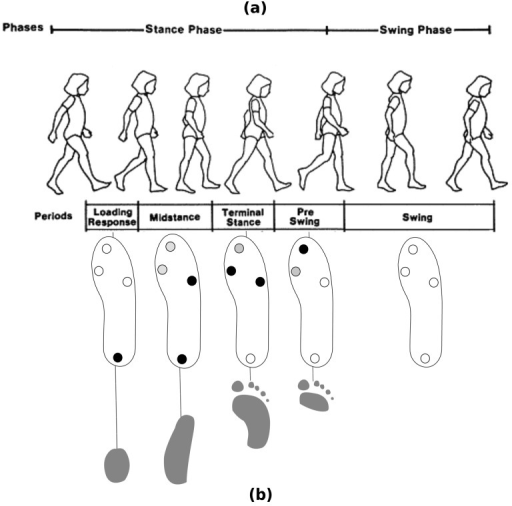 Detected gait subphases (a). FSR and foot pressure patterns (b).