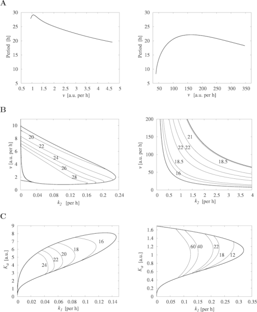 Bifurcation diagrams for Model 2 and Model 3.Left column displays bifurcation diagrams for Model 2. Right column displays bifurcation diagrams for Model 3. (A) Period as a function of the transcription rate of mRNA v. (B) Period as a function of v and k2, representing the transcription and translation rates, respectively. (C) Period as a function of k1 and Ka, representing the degradation rate and the threshold of mRNA, respectively. All other parameter values are taken from Table 1. Numbers in (B) and (C) indicate the period of oscillations along each curve.