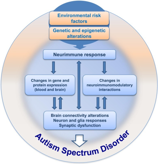 Hypothesis for neuroimmune interactions in triggering the development of ASD. This hypothesis considers the presence of environmental risk factors during pregnancy, followed by immunoneuroendocrine response from the mother to the developing embryo/fetus. The risk factors (such as VPA) would influence central and peripheral neural responses in the context of a crosstalk with the immune system, followed by gradual changes in neural plasticity and function, resulting in behavioral impairment during development, ultimately leading to ASD.
