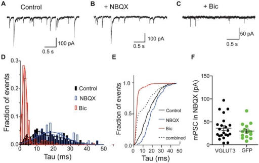 "Glutamate and GABA are released from the same vesicles but do not synergize. Exemplary traces of spontaneous release in striatal autaptic neurons expressing VGLUT3 under three recording conditions: in control ECS (A), ECS with NBQX (B) and ECS with Bic (C). (D) Histogram of decay times (tau) of spontaneous events under the conditions described in (A–C) from 8 neurons. The plots were fitted with single Gaussian (NBQX and Bic; red and blue lines) or with the sum of three Gaussians (control; black line), respectively. (E) Cumulative frequency plot of decay times from histogram in (D). Values from ""NBQX group"" and ""Bic group"" were combined to create the ""combined group"". (F) Comparison of mPSC amplitudes in presence of NBQX. Circles represent individual cells. Horizontal lines show mean ± SEM."