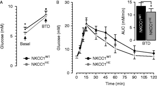 Effect of BTD on fasting blood glucose and glucose clearance in NKCC1HE  mice. (A